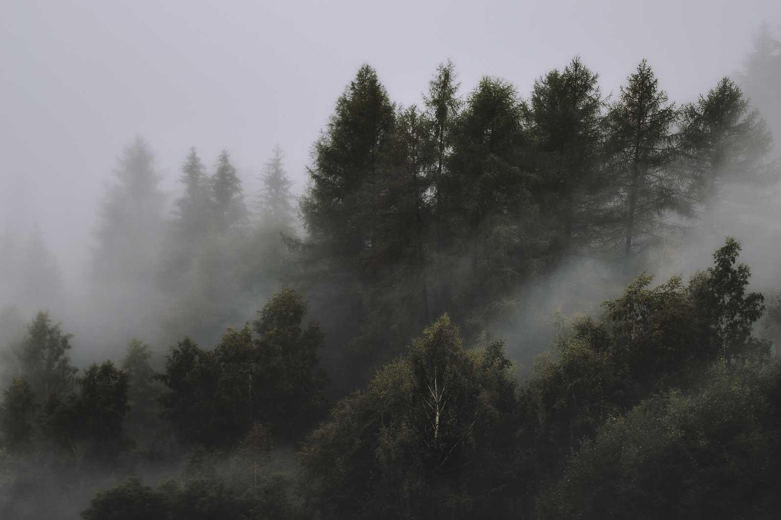 E0002 | Eberhard Grossgasteiger | Foggy forest