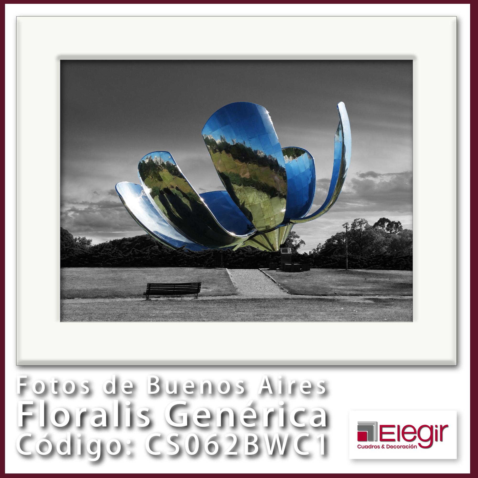 B CS062BWC1 Floralis Generica 40x30